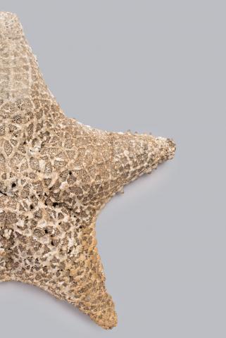Image for Cushion starfish