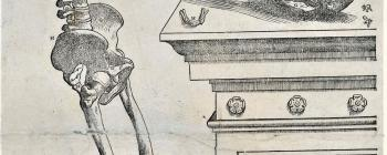 Image for Anatomical engravings